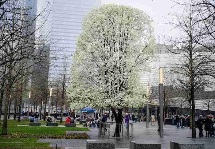 Survivor Tree, memoriale 9/11