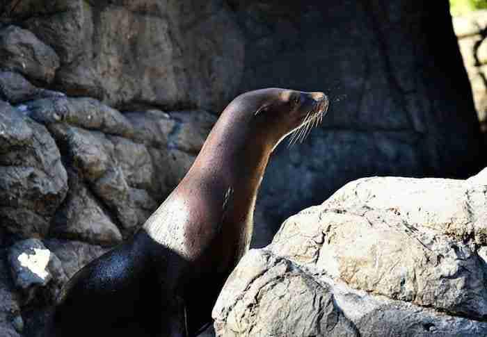 Zoo di Prospect Park